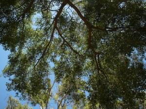 a947e-trees